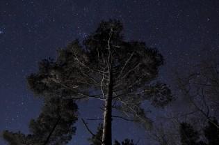 the_night_sky_3